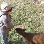 una ovejita bebé en la granja en Oberfrittenbach