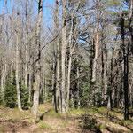 mi bosque favorito y mágico / my favorite and magic Power Place (cerca de / near Maennelstein)