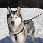 ... y un perrito que le gustó la nieve...