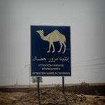 PANNEAU - passage de chameaux