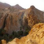 OASIS DE CHEBIKA au pied de Djebel Maadheb