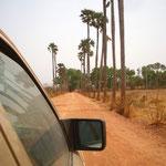 Roniers sur la route de Bobo