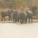 Eléphants de Nazinga