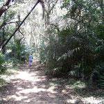 Ilot de forêt tropicale près de la source de la Guinguette