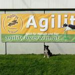 Spiri bei Erwin auf dem Hundeplatz im Hintergrund auf dem Banner Roby sein großer Kumpel