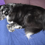 Phebbels bleibt da doch lieber auf der Couch