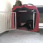 Faye in ihrer Box