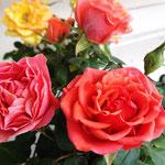 Rosen gibt´s viele auf der Rosenburg...