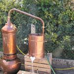 Démonstration de distillation lors du Festival aux champs