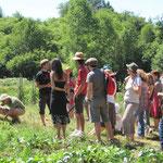 Visite de la ferme dans le cadre du Festival aux champs