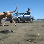 car or doggybeach