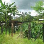 Bananenfarm