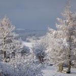 Zauberhafte Natur im Schnee
