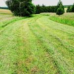 Ein benachbarter Bauer mäht die Parkfläche. So magert der Boden aus.