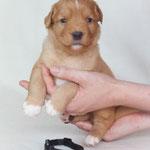 Devil´s Paintbrush Indicator Pumilio (Barney)