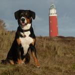 Hier bewache ich den Leuchtturm von Texel