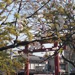 鎌倉八幡宮平家池から