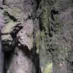 Les gorges de la Fou © Quemando chirucas - Tous droits réservés.