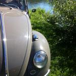 ....kurze Pause bei 35°C.........der Käfer läuft und läuft......