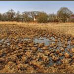 Кочки-болото