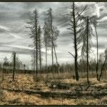 Зона мертвого леса