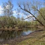 Парк Кусково. Радужный пруд