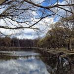 Измайловский парк, Декоративный пруд, апрель