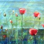 Mohn 60 / 80  ***   Gartenblumen, ausgewandert