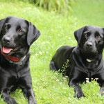 Schwestern - Gioia und Frieda