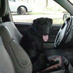 Fee Goya lernt Auto fahren