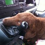 Sie liebt Autofahren
