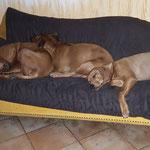 Chenaya & Zaina & Laresa - langsam wird es eng auf dem Sofa!