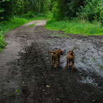Letzter gemeinsamer Spaziergang mit Schwesterchen.