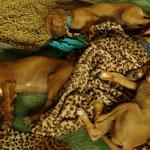Alle auf einem Schlag eingeschlafen!