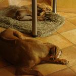 Entsetzen bei Oma Chenaya: Jetzt laufen DIE frei rum und liegen auf meinem Lieblingsplatz!!!!