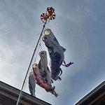 馬堀海岸3丁目の鯉のぼり