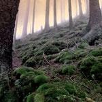 Nebelwald - Blick zum Gipfel des Herrenberg