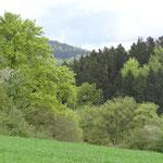 Wiesen und Wälder am Gebirgsrand