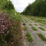 Zwergsträucher und Heide