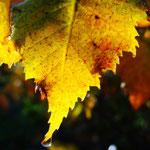 Herbst im Schiefergebirge