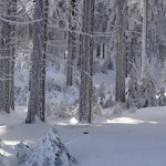 Winter am Rennsteig