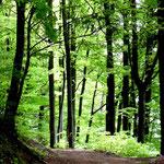 Frühling im Heiligenholz an der Zinselhöhle