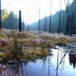 Sumpf und Moor