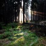 Bergfichtenwald