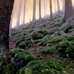 Pfad im Nebelwald an der Keltensiedlung