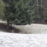 Wolfsgrube beim  Poppenwinder Schlag (historischer Grenzübergang)