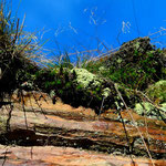 Eisenoxide färben die Gesteine rot