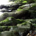 Felsen im Schwarzatal