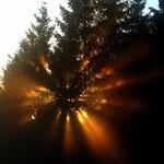 Sonne im Bergwald