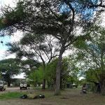 Unsere Public Campsite im Tarangire National Park